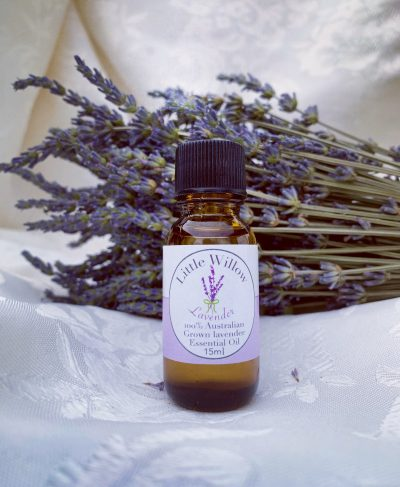 lavender oil little willow lavender